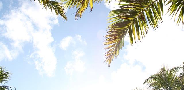 palm-939212_640